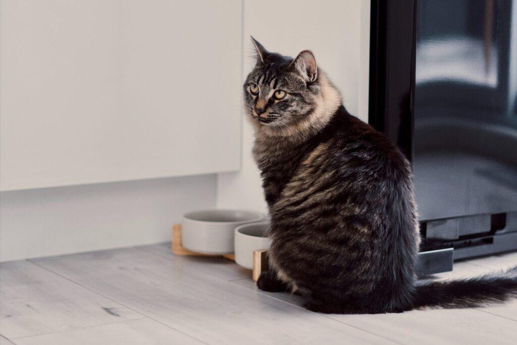 Alimentation pour chat- CatBnB
